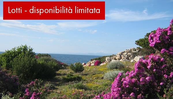 Lotti-portobello